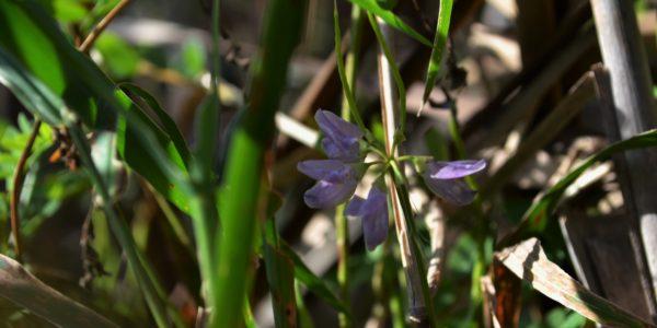fallwildflowers1