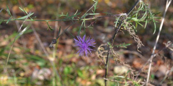 fallwildflowers10