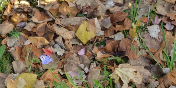 fallwildflowers11