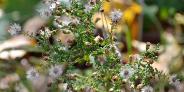 fallwildflowers13