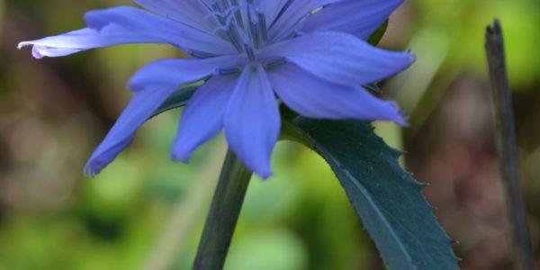 fallwildflowers3