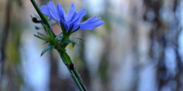 fallwildflowers6